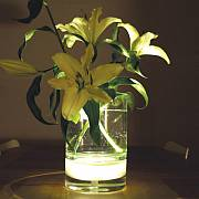BLOOM! LED Glasvase, Marke BLOOM!, Designer Rob Slewe